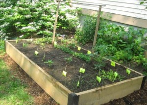 Go Green and Save Money By Starting a Garden