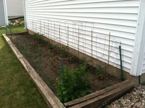 My main garden, small but effective