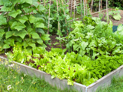 gardening tips to save you money